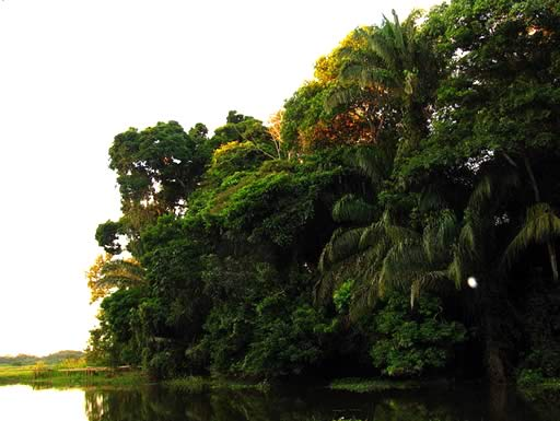 Rurrenabaque, Bolivian Amazon