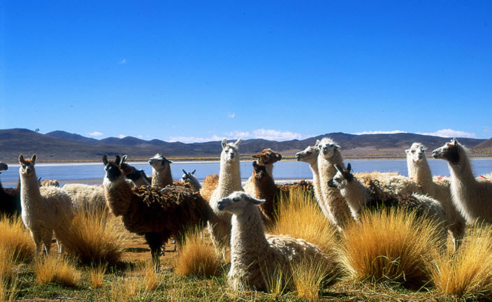 The Top Tourist Attractions in Uyuni