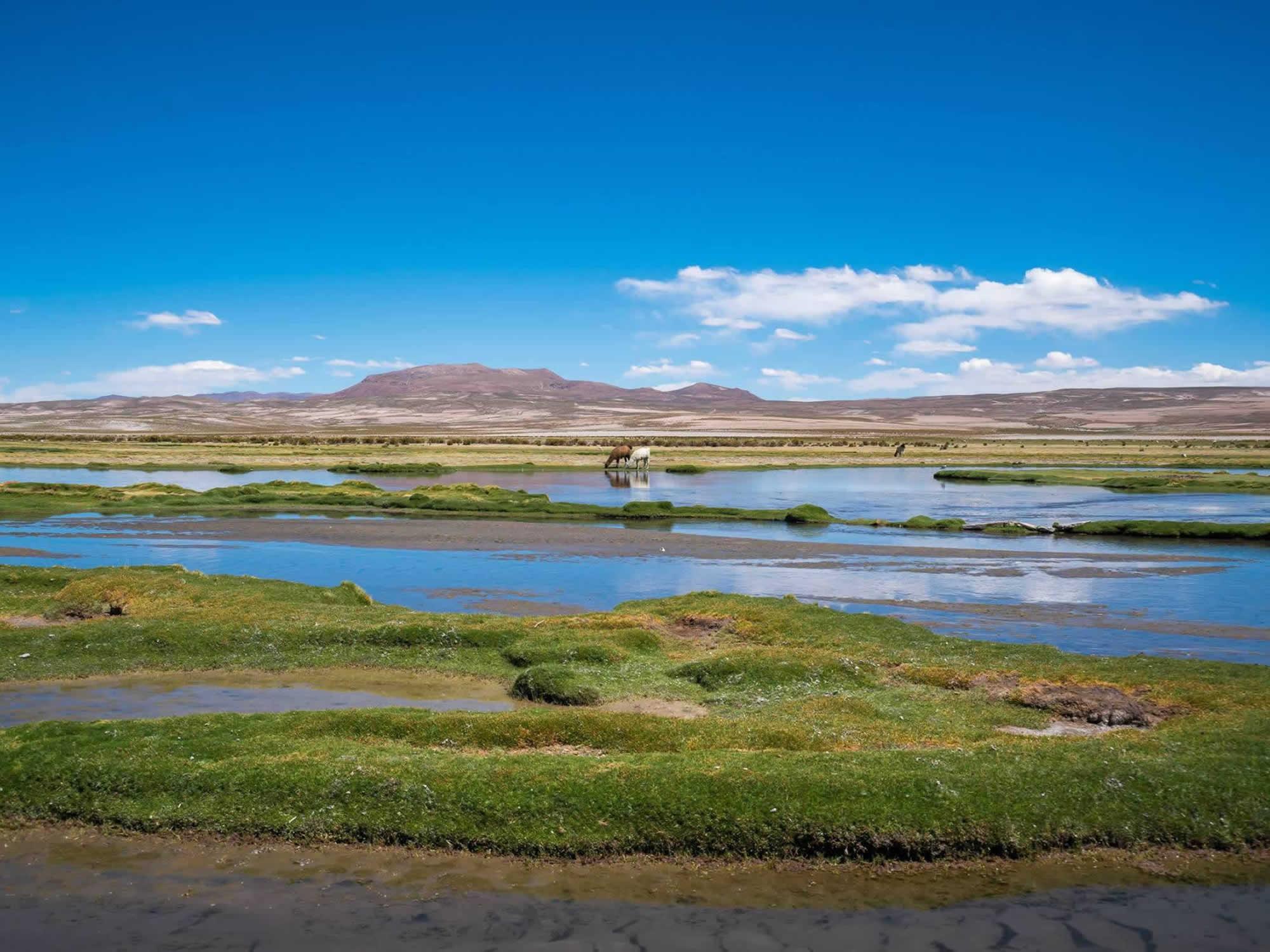 Eduardo Avaroa Reserve