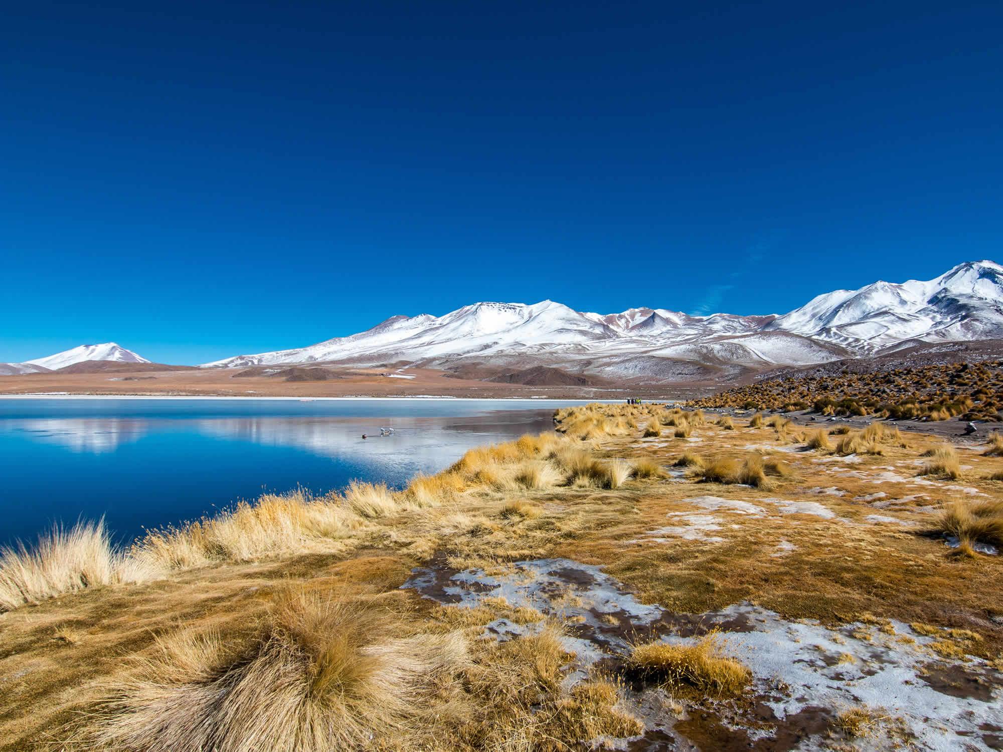 Cañapa Lagoon, Uyuni