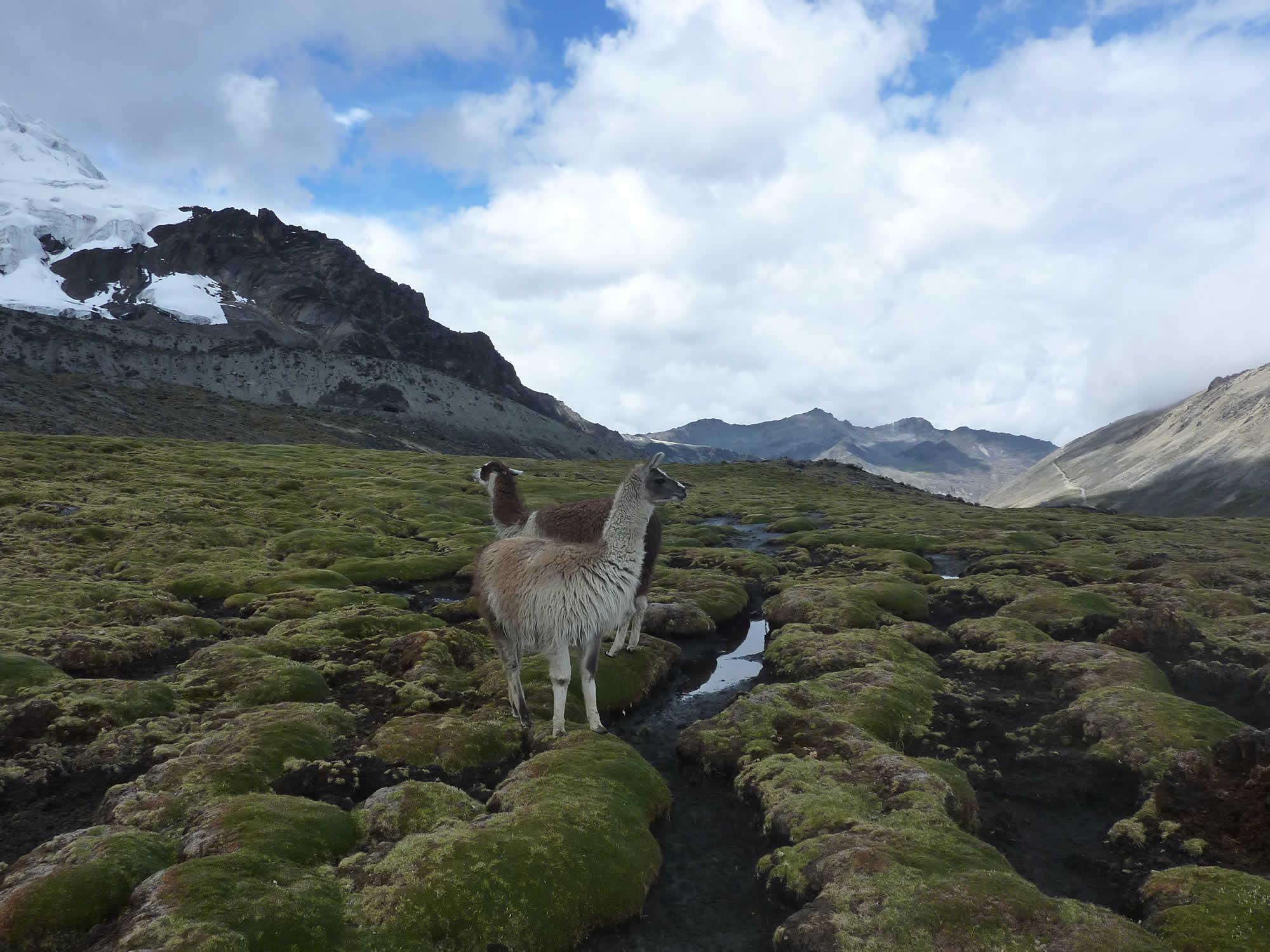 National Park Cotapata