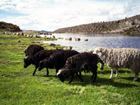 Kari Kari Lagoon