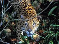 Manuripi Wildlife Reserve