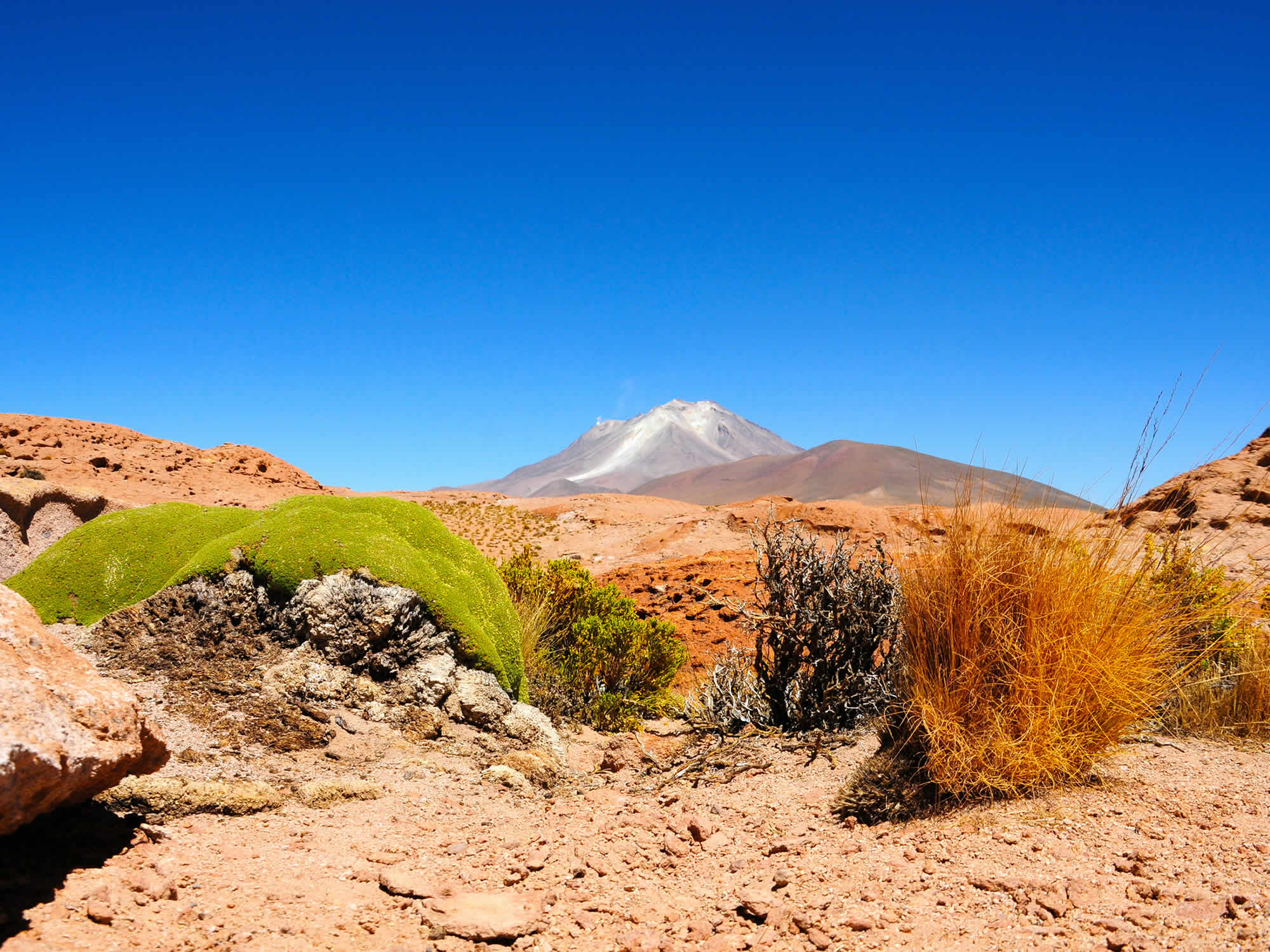 Yareta and the Ollague volcano, Eduardo Avaroa Reserve, Uyuni, Bolivia