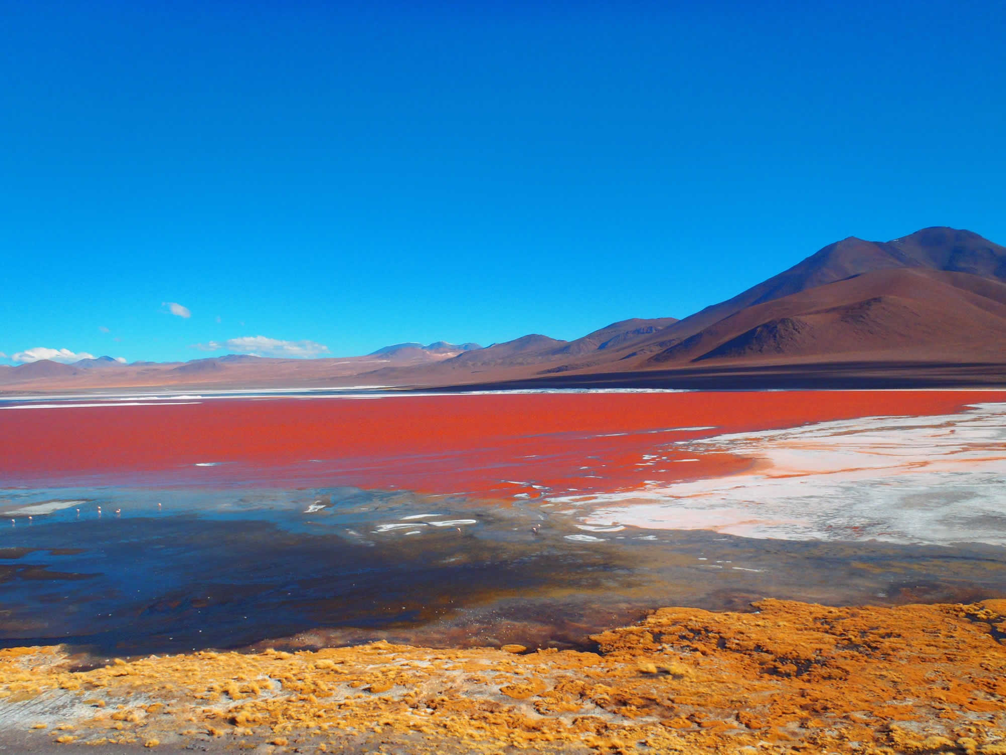 Red Lagoon