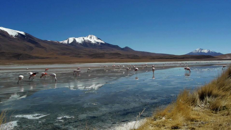 Private Tour Uyuni Salt Flat and Lagoons - Calama, Uyuni
