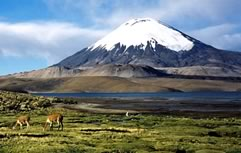 Sajama Park and Lauca River Tour