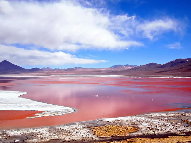 Red Lagoon, Laguna Colorada, Uyuni, Bolivia