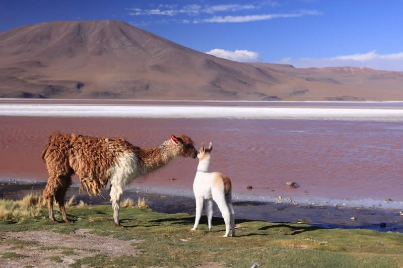 The Top 10 Tourist Attractions In Bolivia Bolivia Travel