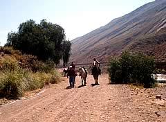 Paseos a Caballo en Potosi, Potosi