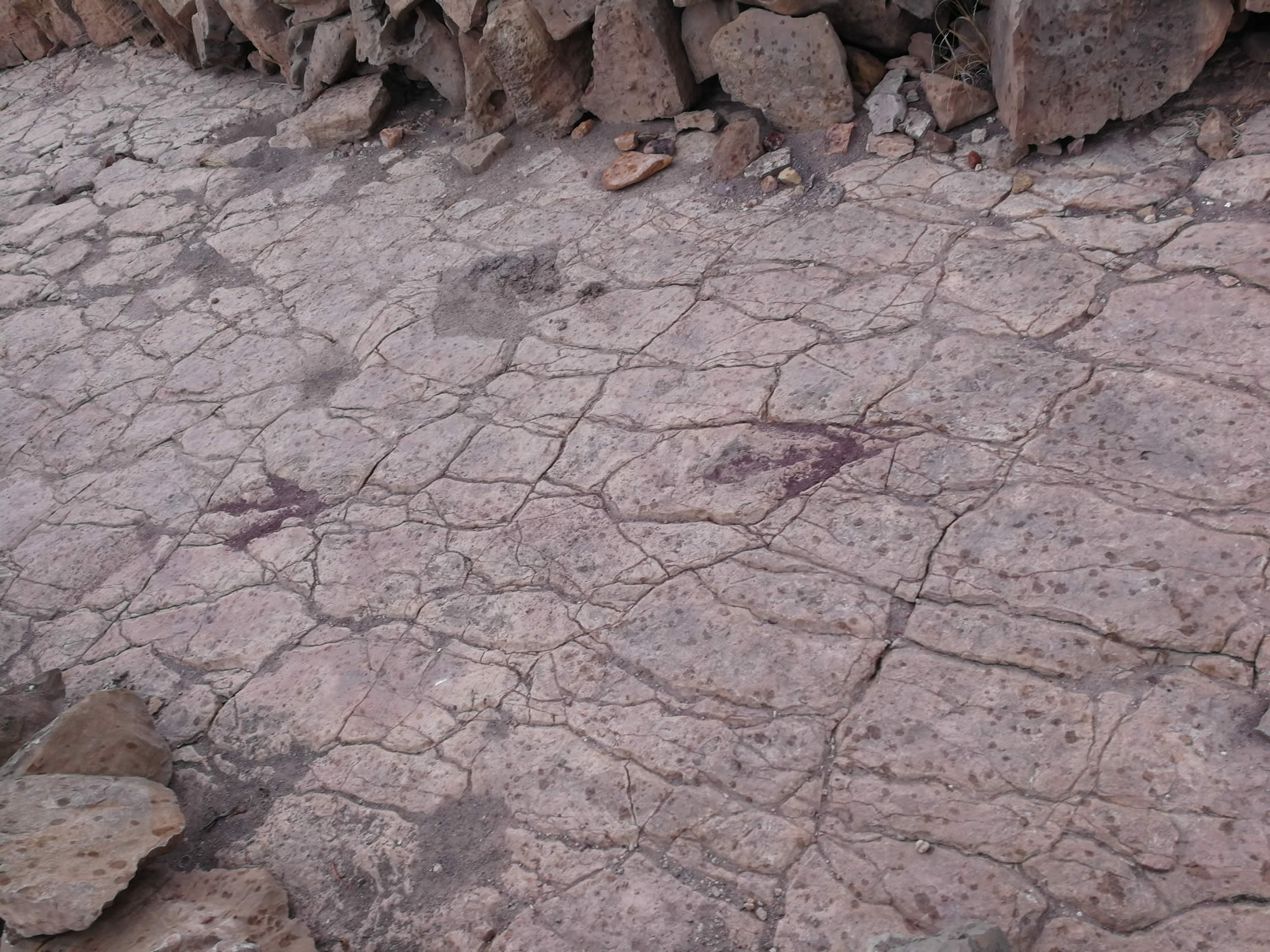 Dinosaur footprints in Torotoro